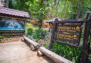 อุทยานแห่งชาติแม่ปิงพร้อมต้อนรับนักท่องเที่ยวมาสัมผัสอากาศหนาว