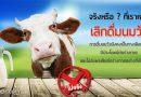 จริงหรือที่เราควรเลิกดื่มนมวัว